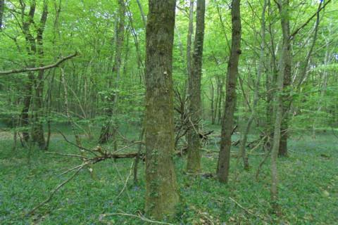 ARDENTES 6,6 ha de bois